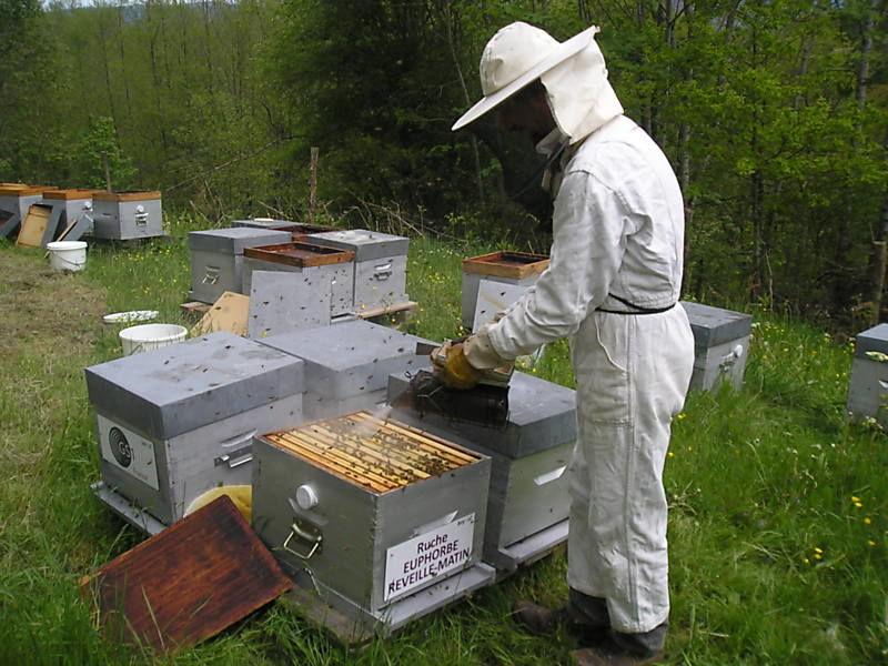 La ruche Euphorbe reveille-matin