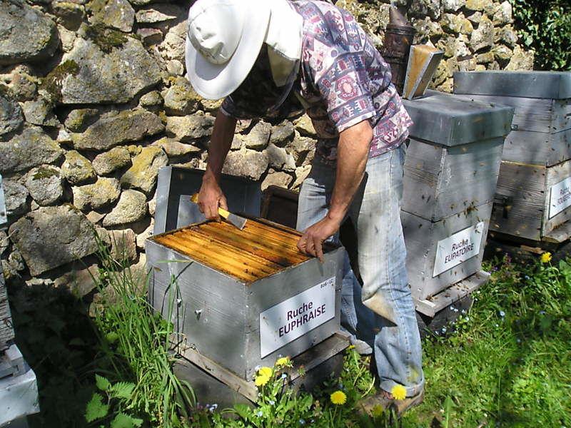 La ruche Euphraise