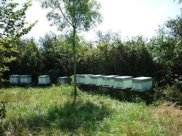 La ruche Grèbe