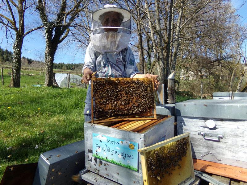La ruche Fenouil des alpes