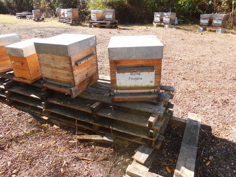 La ruche Fougère