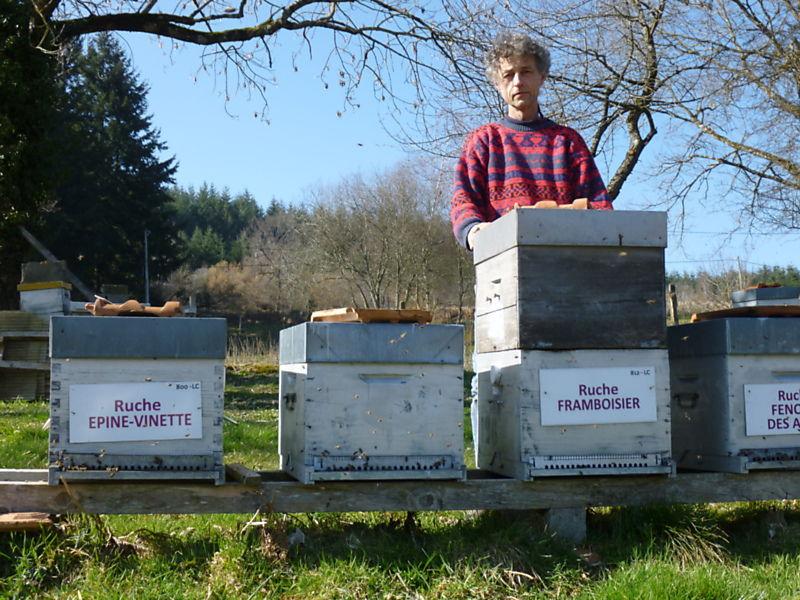 La ruche Framboisier