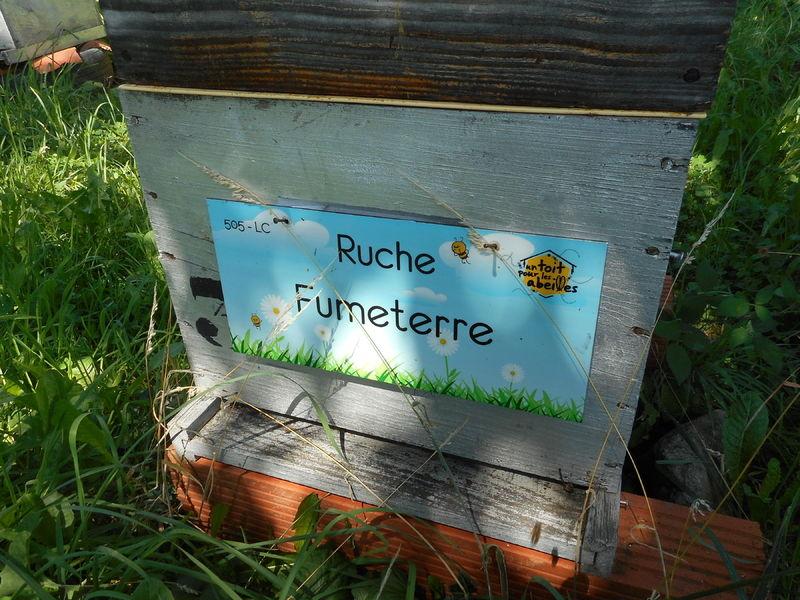 La ruche Fumeterre