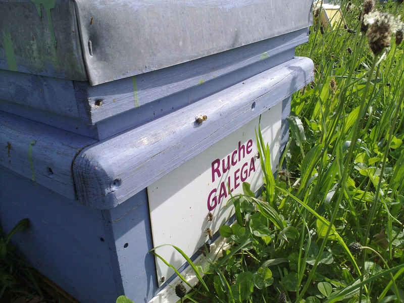 La ruche Galéga