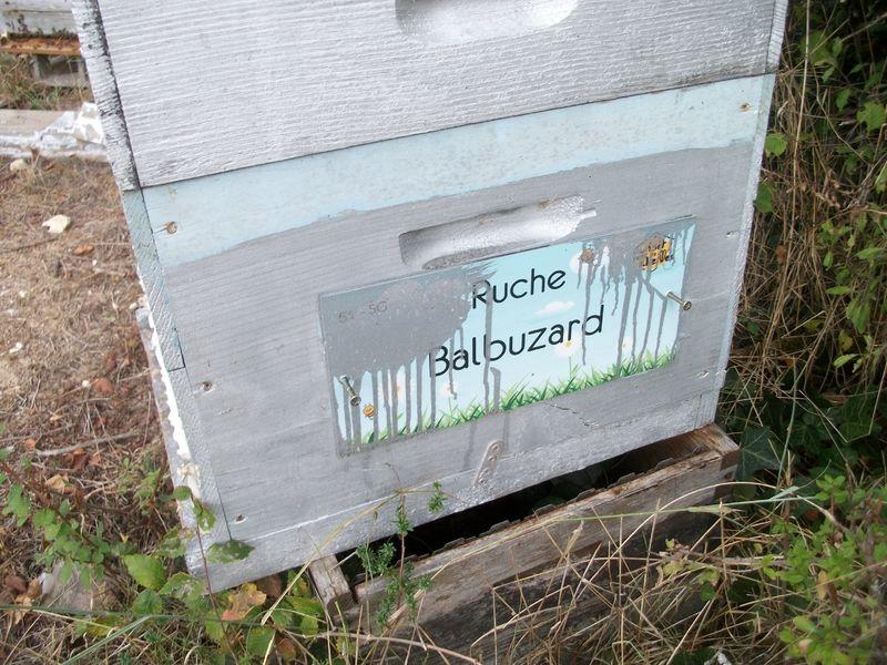 La ruche Balbuzard