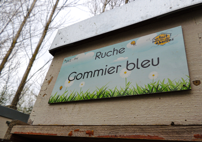 La ruche Gommier bleu