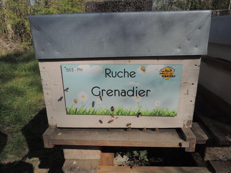 La ruche Grenadier