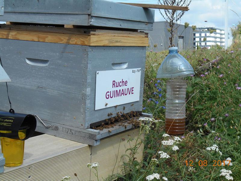 La ruche Guimauve