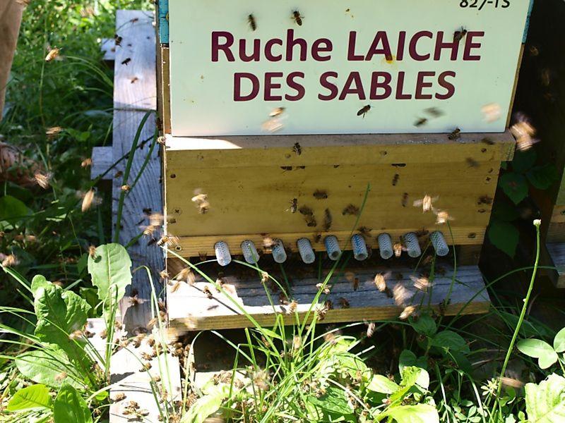 La ruche Laiche des sables