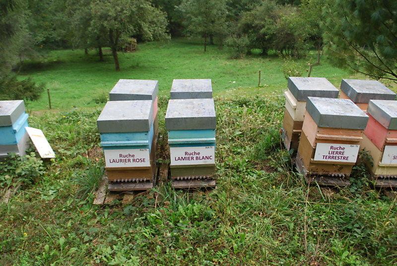 La ruche Lamier blanc