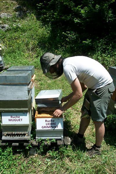 La ruche Lierre grimpant