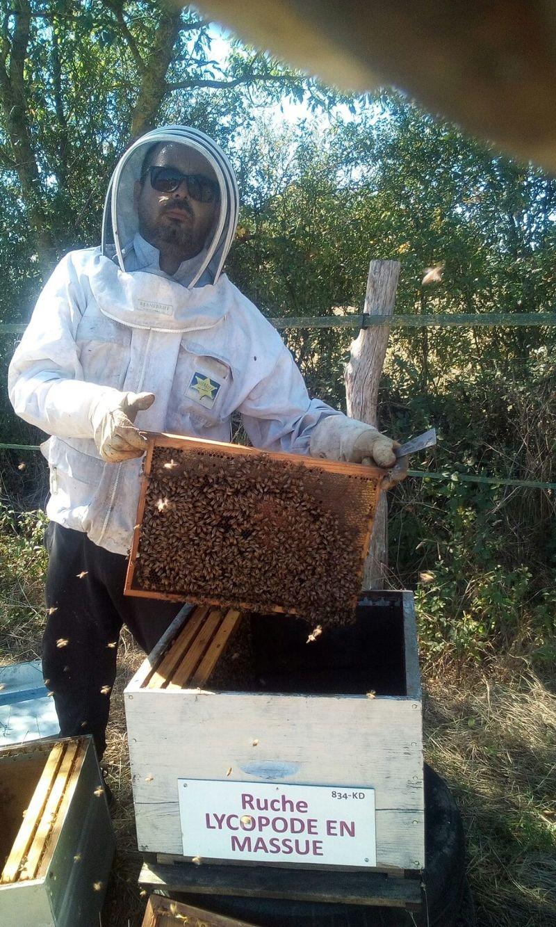 La ruche Lycopode en massue