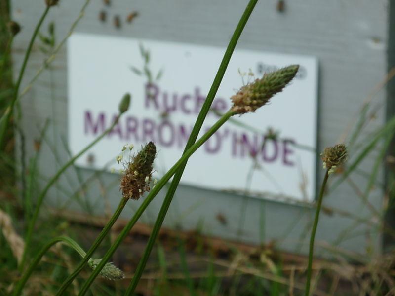 La ruche Marron d inde