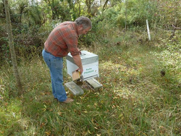 La ruche Pygargue
