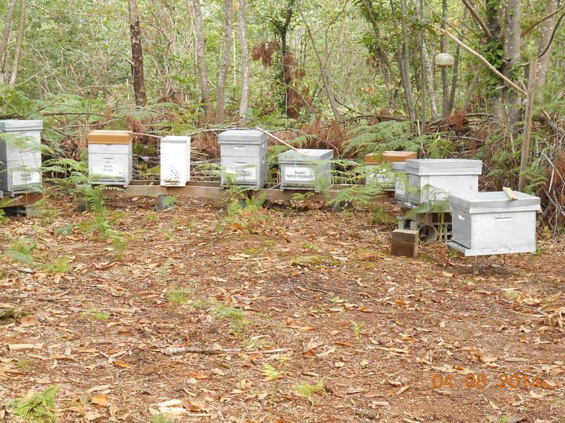 La ruche Menyanthe