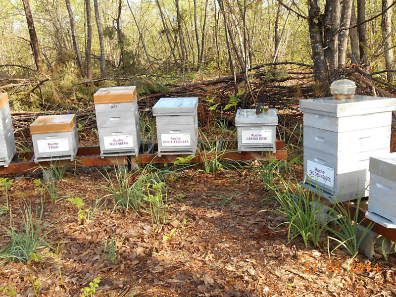 La ruche Mille-feuilles