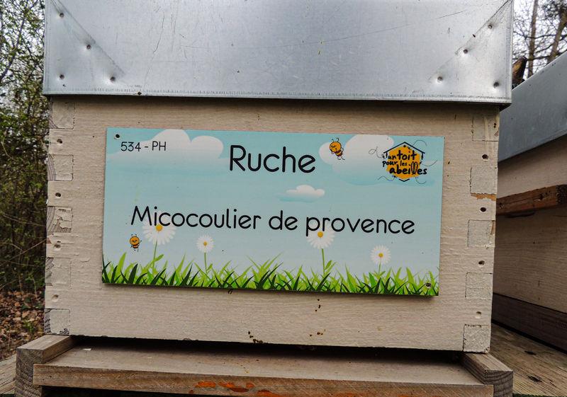 La ruche Micocoulier de provence