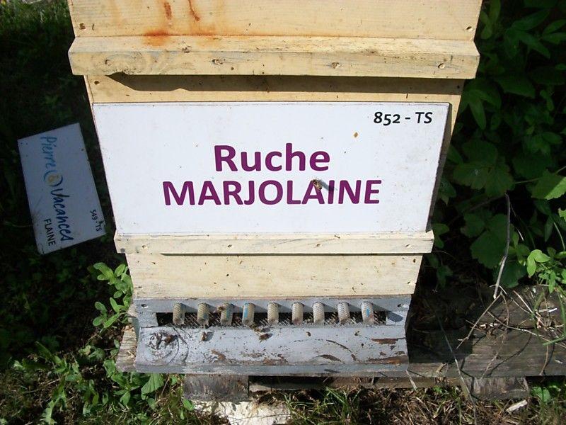 La ruche Marjolaine
