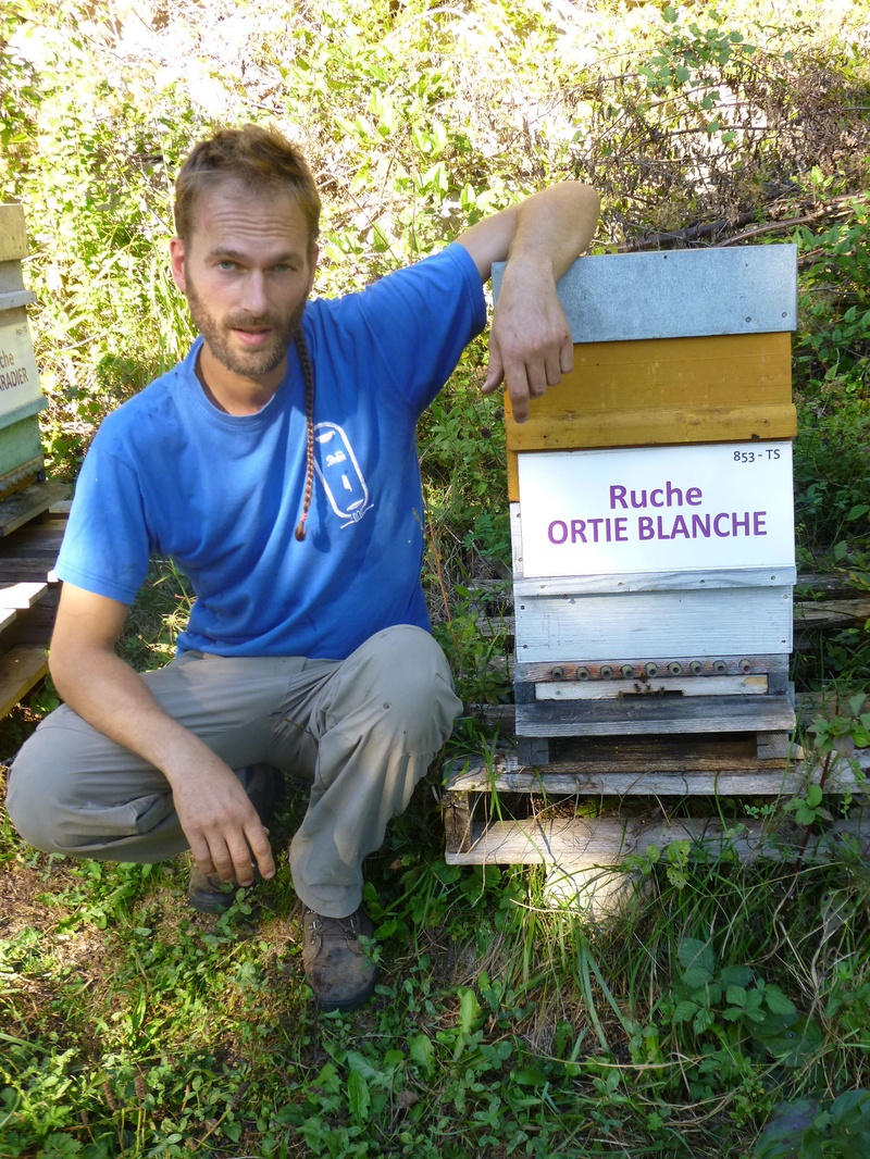 La ruche Ortie blanche