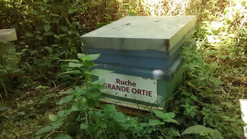La ruche Grande ortie