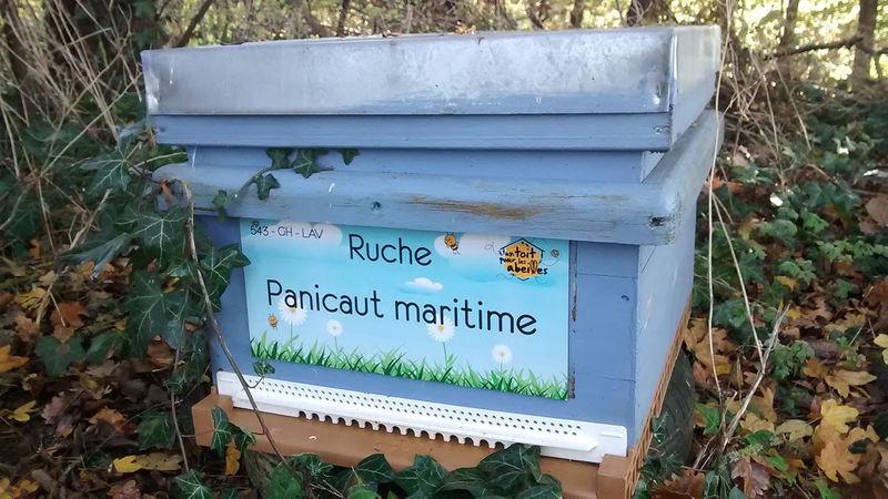 La ruche Panicaut maritime