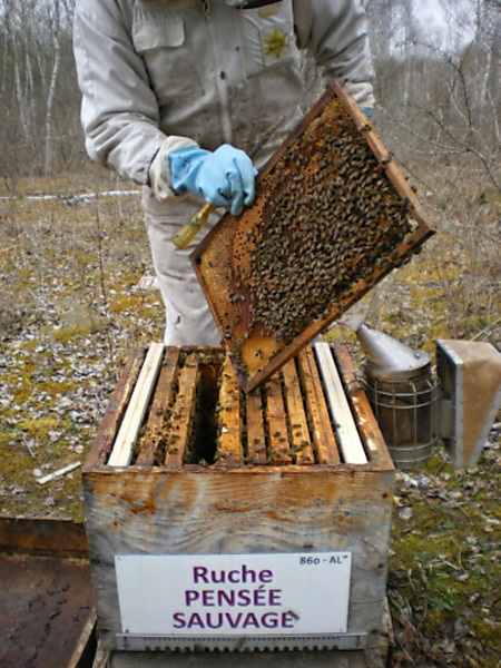 La ruche Pensée sauvage