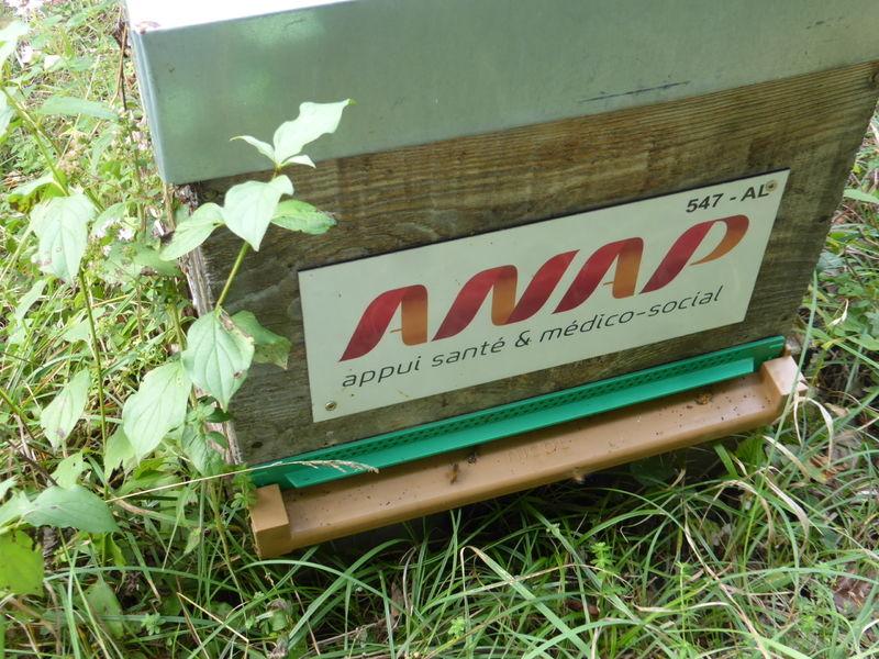 La ruche ANAP