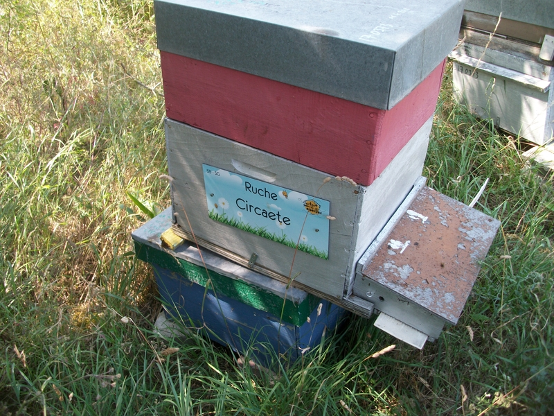La ruche Circaete
