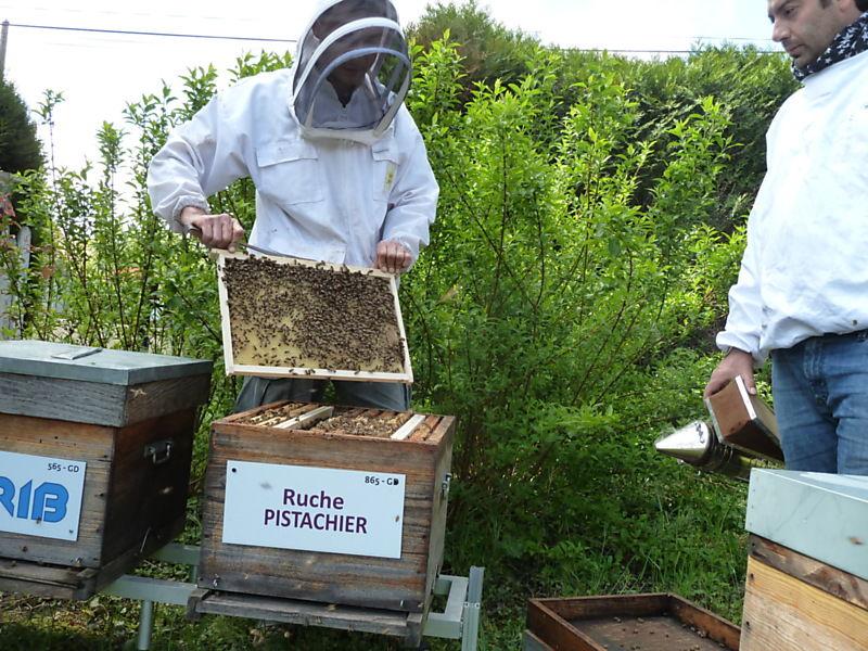 La ruche Pistachier