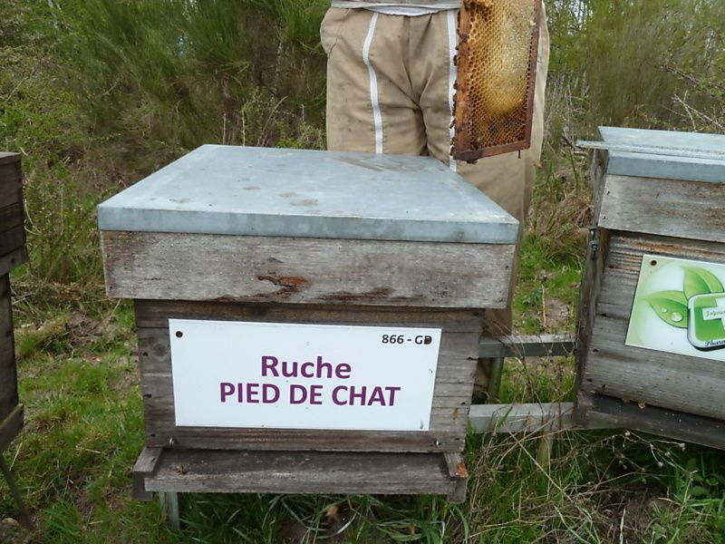 La ruche Pied de chat