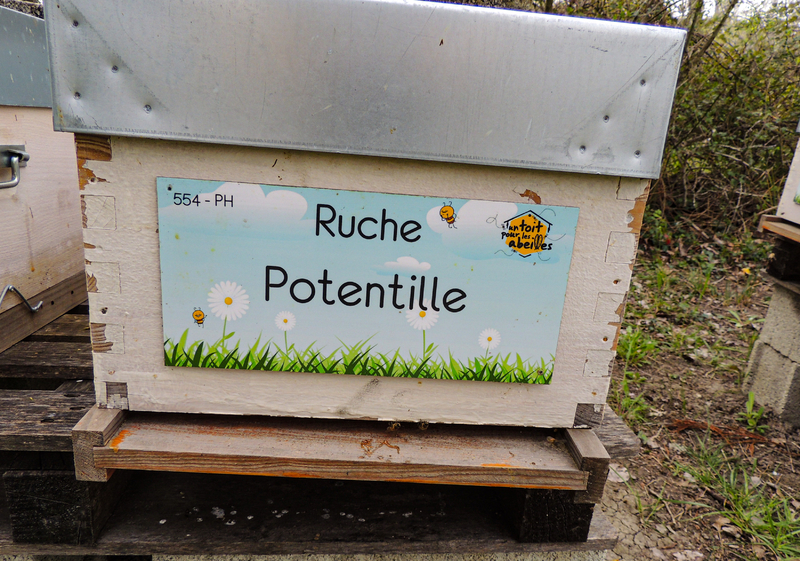 La ruche Potentille