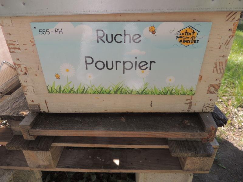 La ruche Pourpier