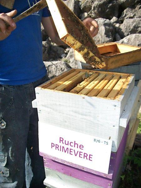 La ruche Primevère