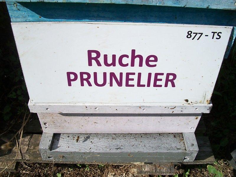La ruche Prunelier