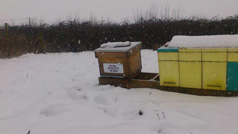 La ruche Roquette de mer