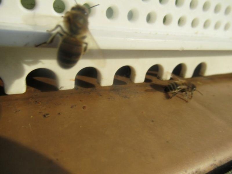La ruche Sabot de venus
