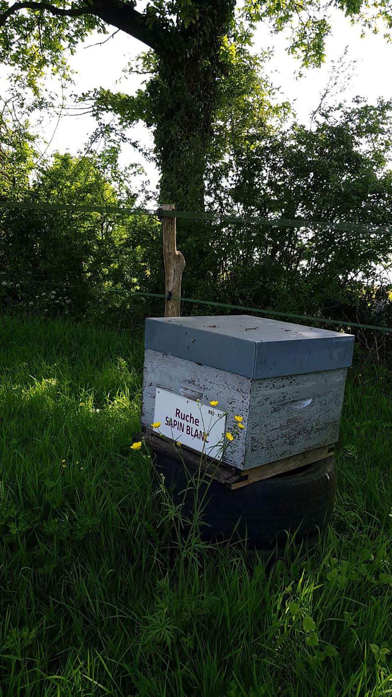 La ruche Sapin blanc