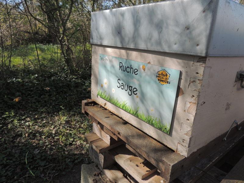 La ruche Sauge
