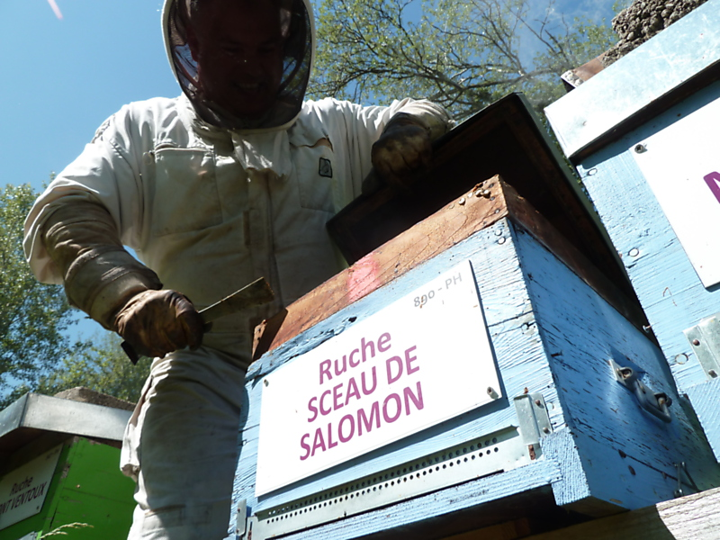La ruche Sceau de salomon