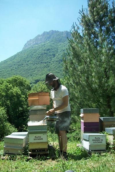 La ruche Sisymbre