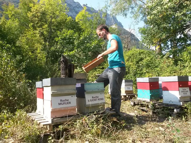 La ruche Souchet rond