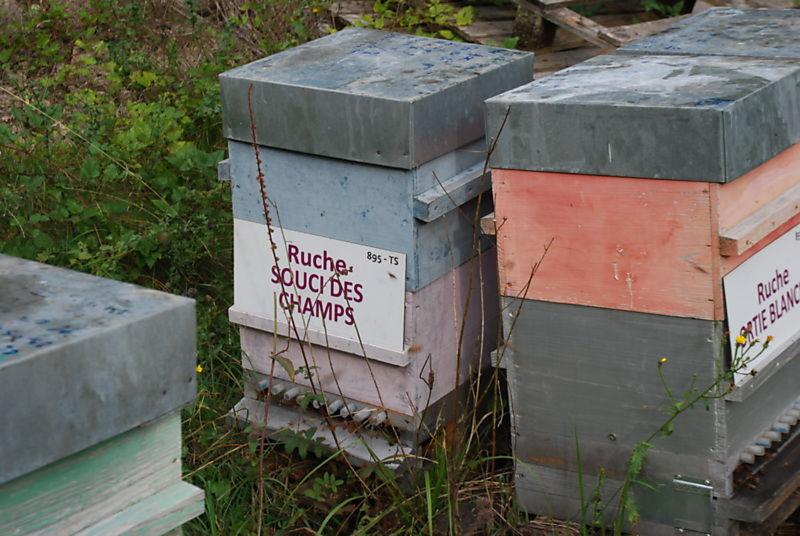 La ruche Souci des champs