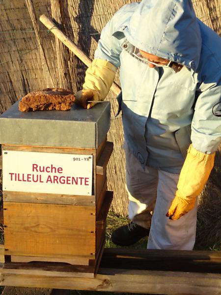 La ruche Tilleul argente
