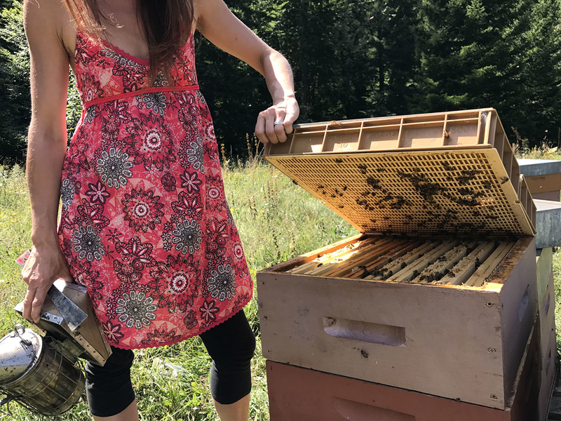La ruche WiserSKILLS