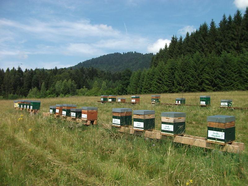 La ruche Talève