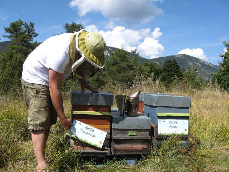La ruche Dschubba