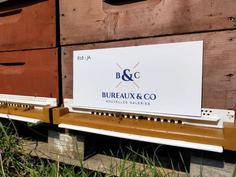 La ruche BCO LNG