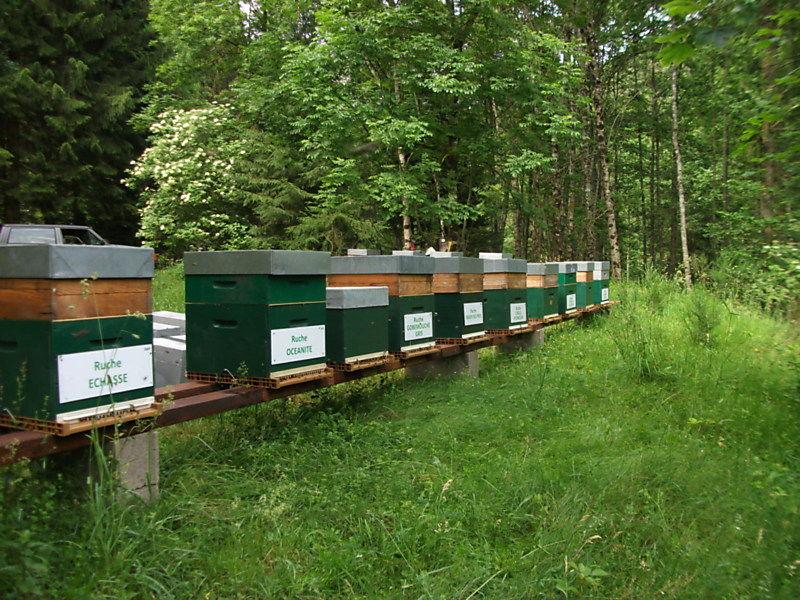 La ruche Echasse