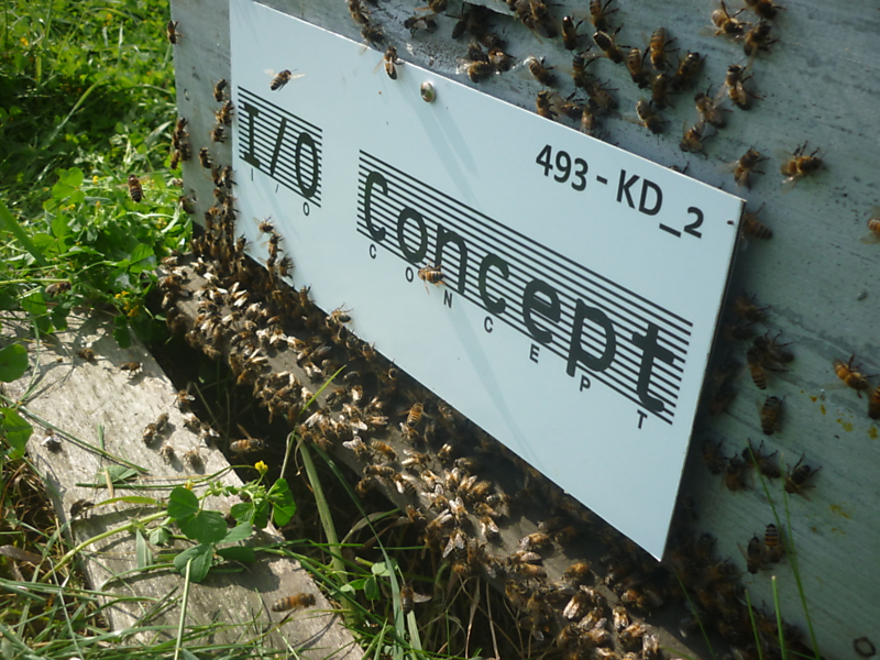 La ruche Input Output Concept