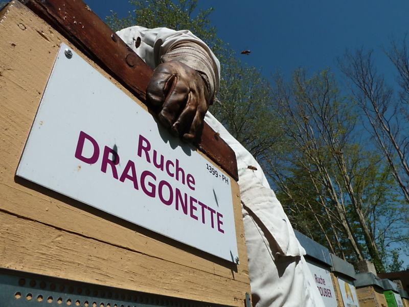 La ruche Dragonette